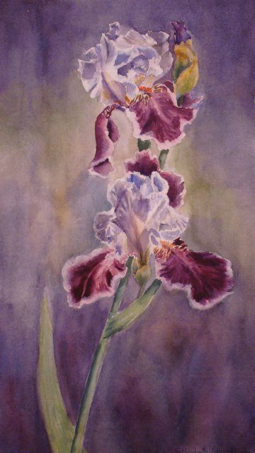 Cranberry Falls - Painting,  18x10 in, ©2009 by Elizabeth Sennett -                                                                                                                                                                                                                                                                  Figurative, figurative-594, irises, flowers, cranberry colored flowers