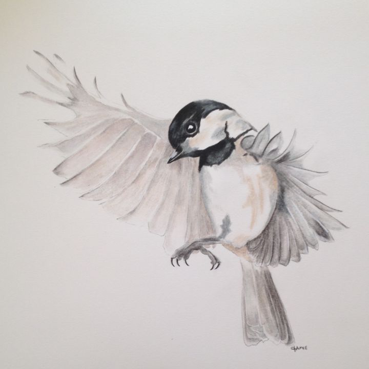 Black Capped Chickadee In Flight Drawing by Jamie Silker ... - photo#1