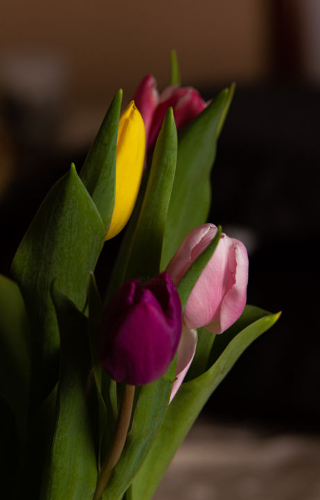 """Photography titled """"Tulips"""" by Jan Hrad, Original Art, Digital Photography"""