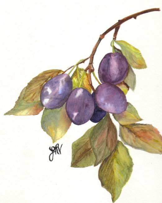 """Painting titled """"Plums"""" by Jan Vallance, Original Art,"""