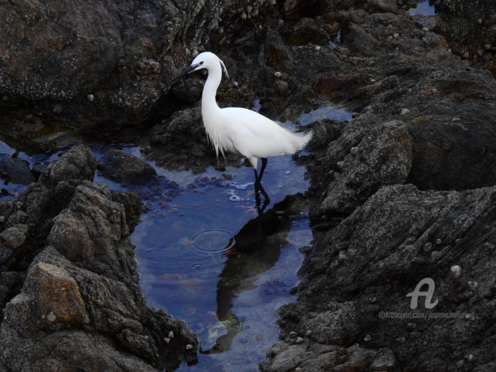 Aigrette Garzette - Photography ©2019 by jean-michel LIEWIG -                                        Birds, Seascape, aigrette garzette, oiseau