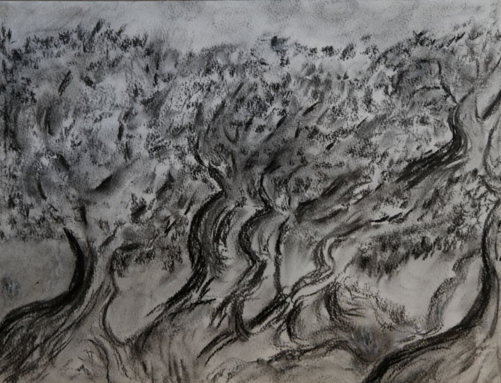 OLIVIERS SOUS LE MISTRAL - Drawing,  70x50 cm ©2013 by Jeannette ALLARY -                                                                                                                        Environmental Art, Realism, Paper, Tree, World Culture, Garden, Rural life, Nature, Oliviers, jardi, botanique dessin crayon