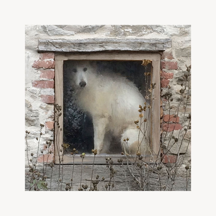 Chien blanc.jpg - Photography,  7.9x7.9x1.2 in, ©2017 by Jean-Paul ZAK -                                                                                                                                                                                                                                                                                                                                                                                                                                                                                                  Figurative, figurative-594, Animals, chien, animal, village, regard, blanc, art figuratif, Limited Edition