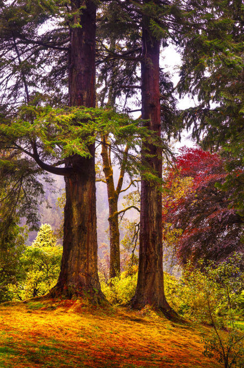"""Photography titled """"Trees in Autumn Glo…"""" by Jenny Rainbow, Original Art,"""