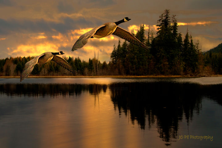 """Photography titled """"Canada geese at Hid…"""" by Joe Pate, Original Art, Digital Photography"""