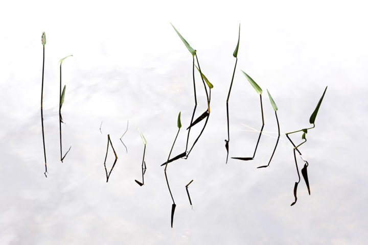 Lines & Angles - Photography,  16x24 in, ©2007 by John Manno -                                                                                                                                                                                                                                                                                                                                                                                                          Minimalism, minimalism-606, Nature, lines, angles, water, plants, geometry