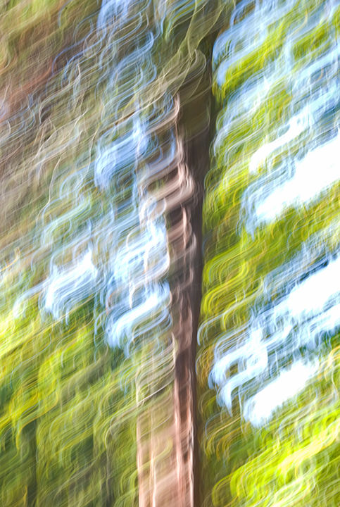 """Photography titled """"Curly Hair of the T…"""" by Jola, Original Art, Digital Photography"""