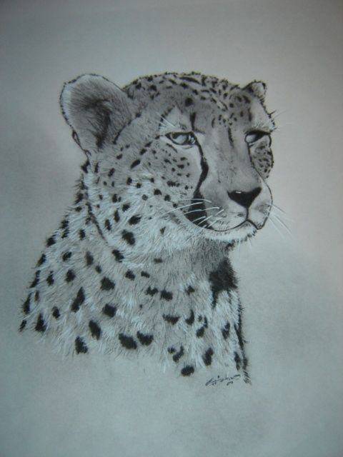 Cheetah - Drawing,  13x11 in, ©2007 by Chance Kaiden -
