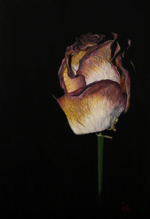 "Oil painting ""Withered Gift"" - Pittura,  27,6x19,7x0,8 in, ©2017 da Kate Kamington -                                                                                                                                                                                                                                                                                                                                                              Hyperrealism, hyperrealism-612, Fiore, rose, black, hyperrealism, oil"