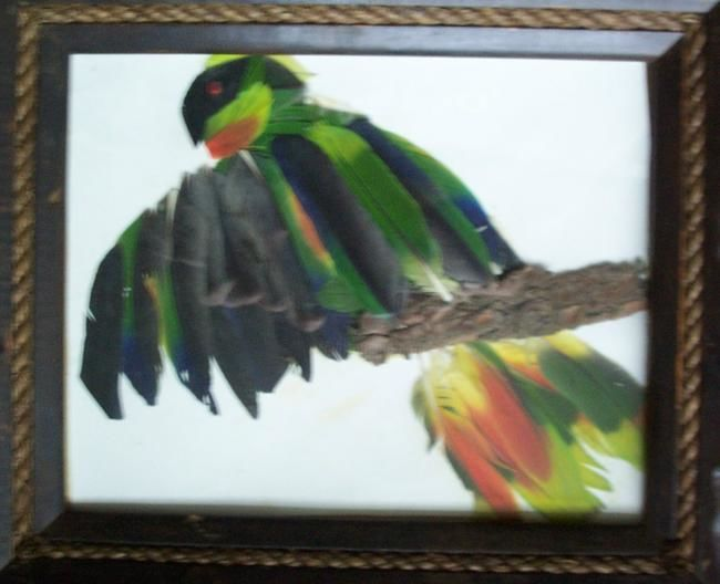 feathered friend - Artcraft,  0.4 in, ©2006 by Kane -