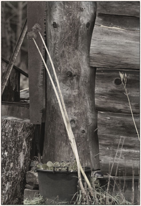 """Photography titled """"bucksawn-onions-web…"""" by Kevin W Beer, Original Art,"""