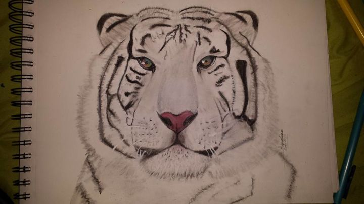 Tigre Décoration - Drawing, ©2016 by Delphine Kinoxe -                                                              Animals