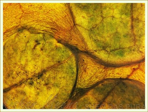 """Photography titled """"Composition"""" by Kishan Meena, Original Art,"""