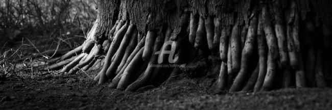 """Photography titled """"Root01"""" by Kishore Singh, Original Art,"""