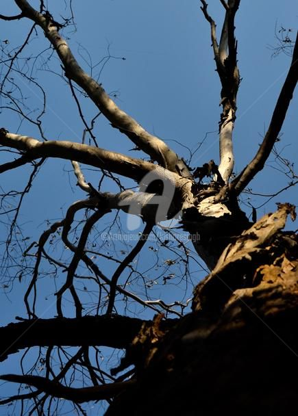"""Photography titled """"The Old Dead Tree"""" by Kishore Singh, Original Art,"""