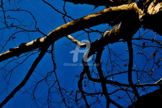 """Photography titled """"The Old Dead Tree01"""" by Kishore Singh, Original Art,"""