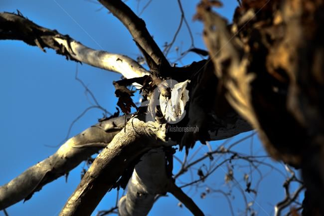 """Photography titled """"The Old Dead Tree03"""" by Kishore Singh, Original Art,"""