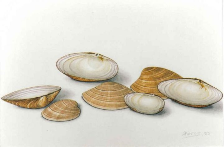 with shells - Painting,  40x30 cm ©2004 by Thomai Kontou -            sea shells by thomai kontou