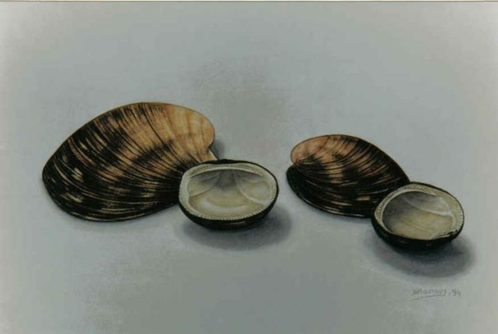 with shells 2 - Painting,  40x30 cm ©2004 by Thomai Kontou -            sea shells by thomai kontou