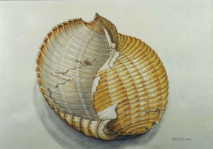 post card with shells - Painting,  35x45 cm ©2004 by Thomai Kontou -            sea shells by thomai kontou