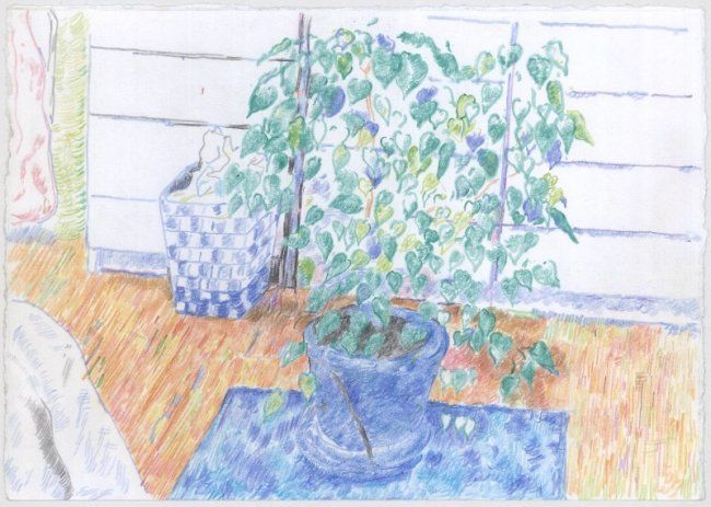 """Drawing titled """"plant"""" by Petar Kosic, Original Art, Other"""