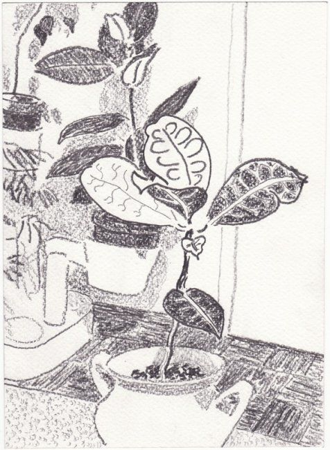 """Drawing titled """"plants"""" by Petar Kosic, Original Art, Other"""