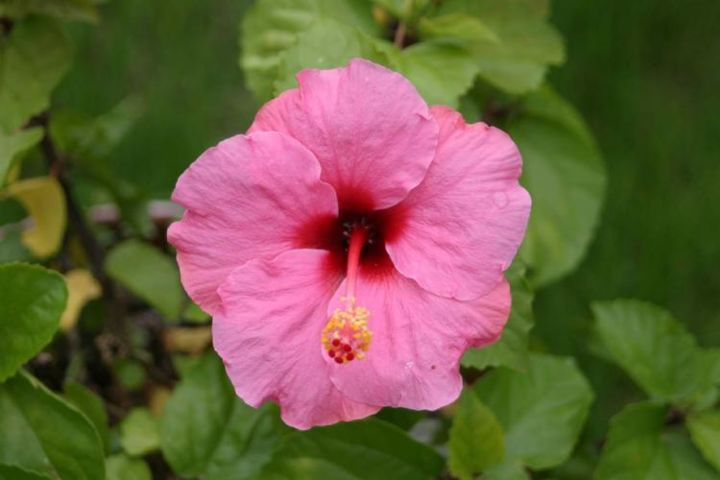 """Photography titled """"Hibiscus"""" by Jonathan Cole, Original Art,"""