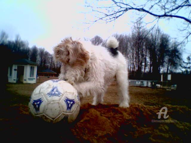 Go Arsenal ! - Photography, ©2006 by Hal Studholme -                                                                                                                                                                                                                                                                                                                                                                                                                                                                                                                                                                                                                                                                                                                                                                                                                      Conceptual Art, conceptual-art-579, Dogs, fox, terrier, Hixie, puppy, Michigan, park, dog, soccer, Arsenal, Wire, football, yard, toycamera, lahtzu