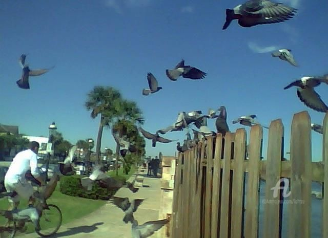 General Elements - Photography, ©2009 by Hal Studholme -                                                              a photograph of St Augustine Florida