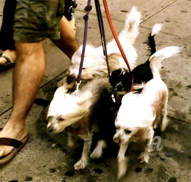 many - Photography, ©2010 by Hal Studholme -                                                              a photograph of a group of dogs being walked in lower manhattan