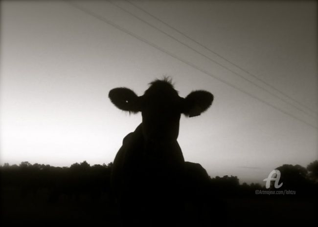 bovine singuratic - Photography, ©2010 by Hal Studholme -                                                                                                                                                                                                                                                                                                                                                                                                                                                                                                                                                                                                                                      Land Art, land-art-957, Animals, Texas, Pittsburgh, Ranch, Cattle, Cow, outdoors, American, South, rural, livestock