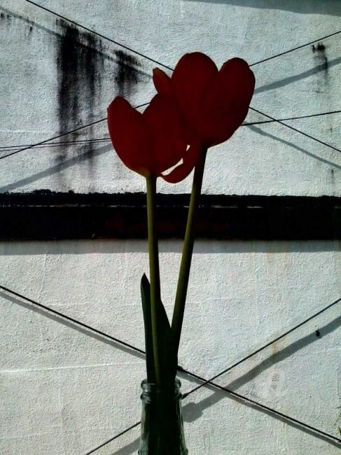 red flowers - Photography, ©2012 by Hal Studholme -                                                                                                                                                                                                                                                                                                                                                                                                                                                                                                                                                                                                                                      Abstract, abstract-570, Flower, Durham, NC, flowers, red, vase, American, Cafe, intimate, mood, roses