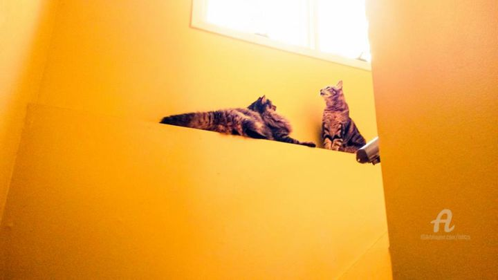 Mira - Photography, ©2017 by Hal Studholme -                                                                                                                                                                                                                                                                                                                                                                                                                                                                                                                                                                                                                                                                                                                                                                                                                      Figurative, figurative-594, Animals, cats, two, Carolina, NC, friends, cat, yellow, stairwell, stairs, house, domestic, contrasts, other, pets