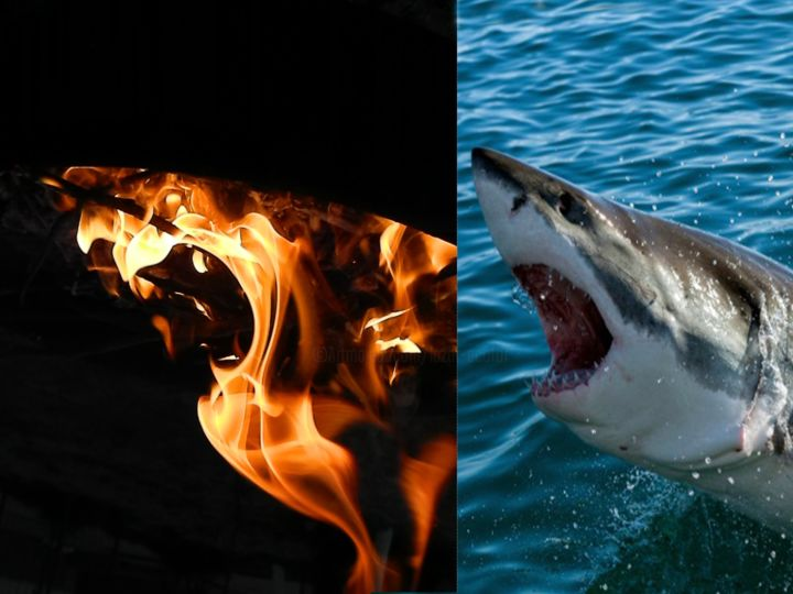 fire-shark - Photography, ©2018 by Sorin Niculae Lazar -                                                                                                                                                                          Abstract, abstract-570, Animals