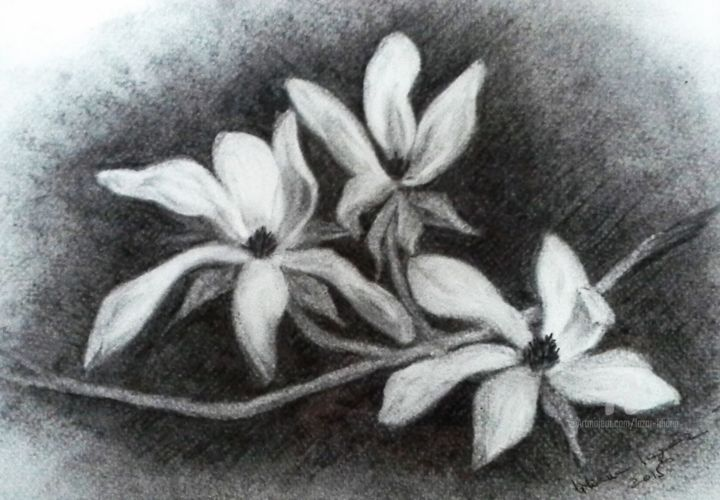 """Drawing titled """"Magnolia"""" by Liliana Lazar, Original Art, Charcoal Mounted on Other rigid panel"""