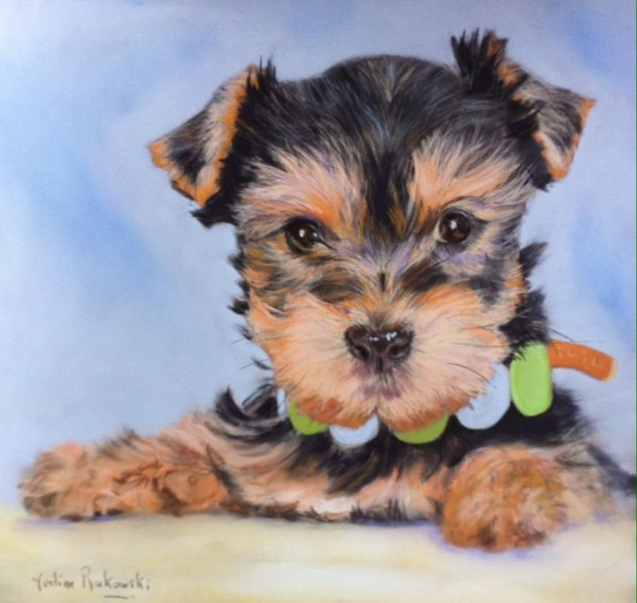 Sweety - Drawing,  13.8x13.8 in, ©2014 by Koki -                                                                                                                                                                                                  yorkshire, chien, chiot, animaux de compagnie