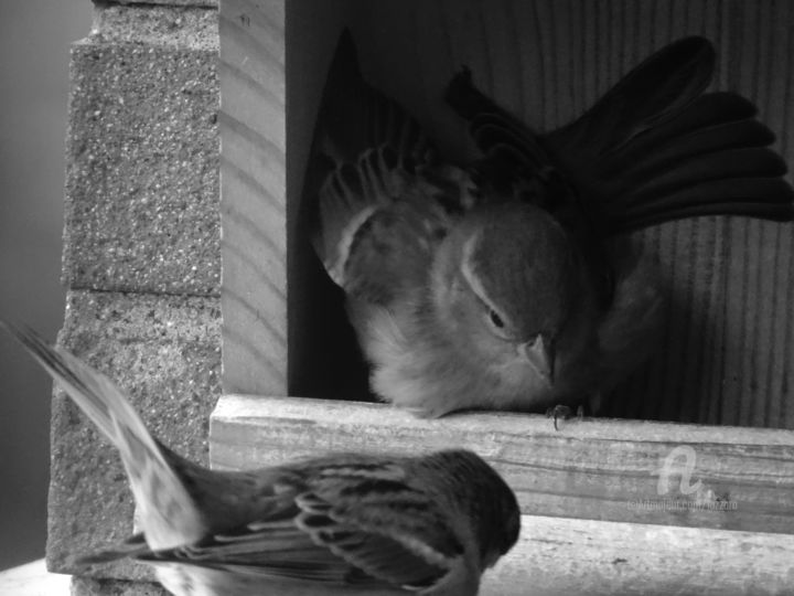Fighting for the lunch 2 - Photography, ©2019 by Aurelio Nicolazzo -                                                                                                                                                                                                                                                                      Expressionism, expressionism-591, Birds, Black and White, Birds