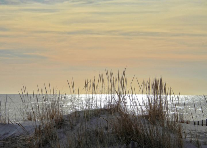 """Photography titled """"Reeds in Sand"""" by Leo Tujak, Original Art, Digital Photography"""