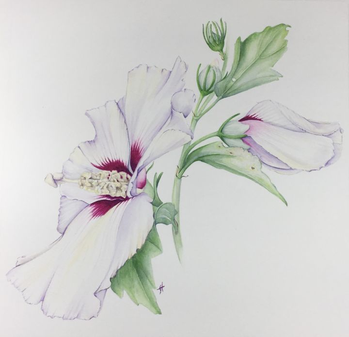 Rose of Sharon - Hibiscus - Painting,  9.8x9.8x0.9 in, ©2019 by Liz Hansen -                                                                                                                                                                                                                                                                                                                                                              Figurative, figurative-594, Botanic, botanique, aquarelle, flower, botanical