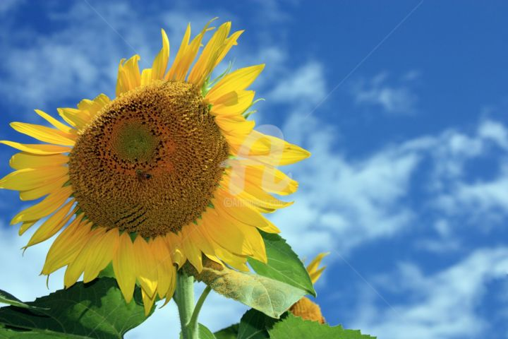 Sunny - Photography ©2014 by Lou Zucchi -                                                        Environmental Art, Paper, Flower