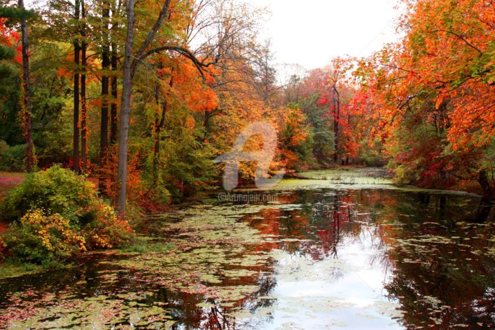 Brilliant Fall - Photography, ©2014 by Lou Zucchi -                                                              Landscape