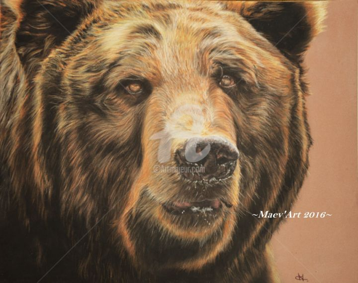 Grizzly animaux - Dessin de grizzly ...