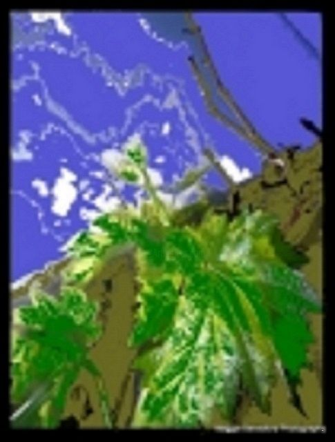 """Digital Arts titled """"The Grapevine"""" by Maggie Beresford, Original Art, Digital Painting"""