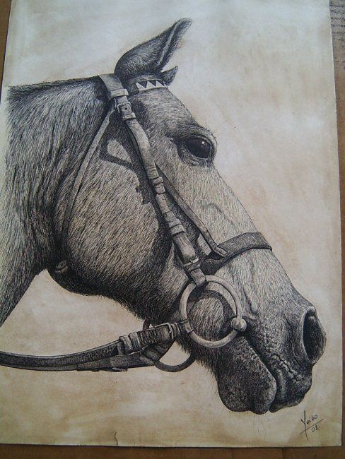 """Drawing titled """"Corcel"""" by Maico Cánepa, Original Art, Other"""