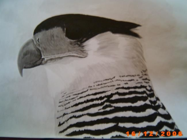 """Drawing titled """"Carancho"""" by Maico Cánepa, Original Art, Other"""