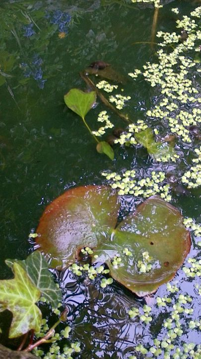 waterlilies.jpg - ©   Online Artworks