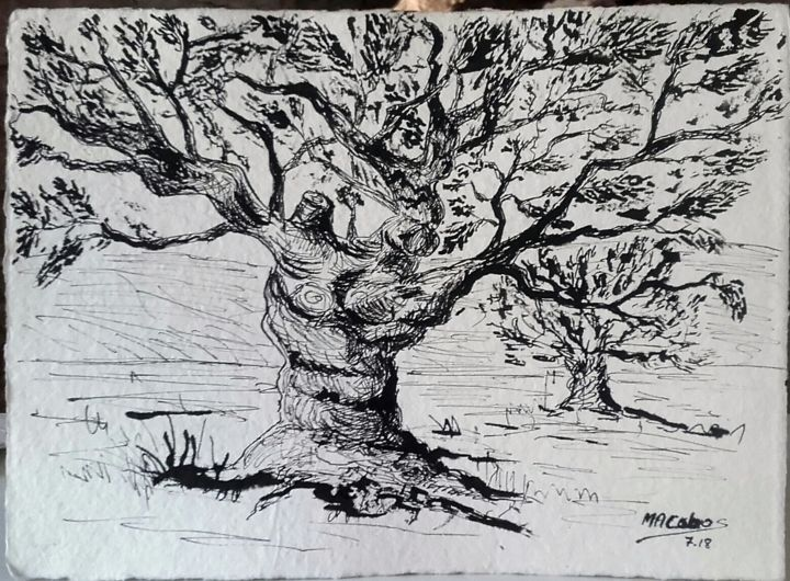 Le vieil olivier - Drawing,  6.3x8.3 in, ©2018 by Marian Cobos -                                                                                                                                                                                                                                                                                                                                                                                                                                                                                                                                                                                              Figurative, figurative-594, Paper, Vegetable, Tree, Botanic, Rural life, Nature, olivier, arbre, encre de Chine, dessin