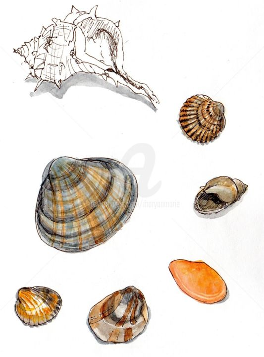 coquillages à Canet en Roussillon - Drawing, ©2019 by Anne-Marie Mary -                                                                                                                                                                                                                          Figurative, figurative-594, Beach, coquillages