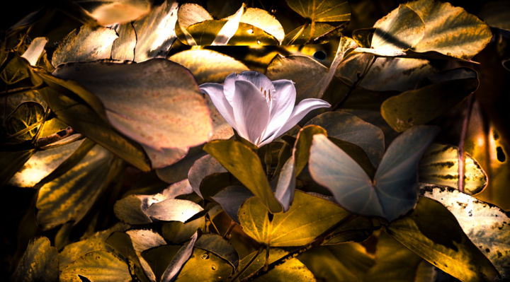 Sur tapis de feuilles - Photography, ©2019 by Anna Fratoni -                                                                                                                                                                                                                                              Tree, Botanic, artwork_cat.Colors, Flower, Garden