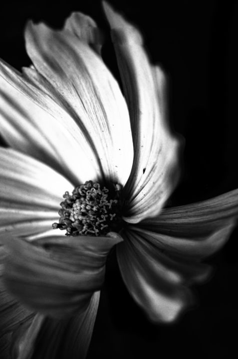 La Valse - Photography, ©2019 by Anna Fratoni -                                                                                                                                                                                                                                              Flower, Places, Light, Nature, Black and White